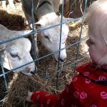 Kinderopvang Poppejans Groningen - kinderboerderij